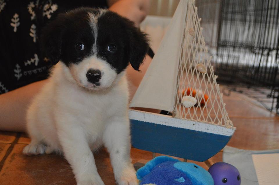 Tortuga~Adopted!
