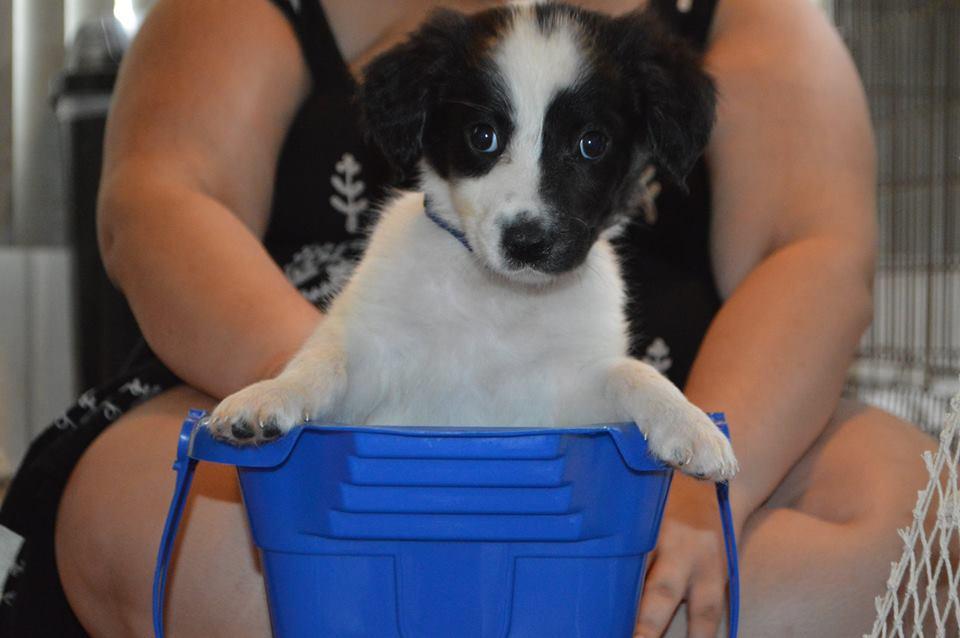 Elizabeth Swann ~ Adopted!