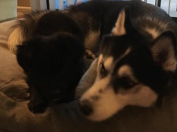 Black Pearl ~ Adopted!
