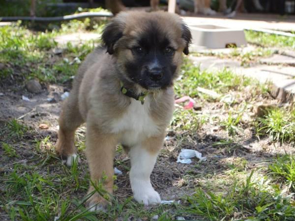 Hercules ~ Adopted!