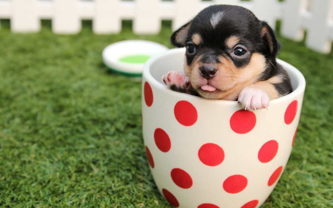 Best Dry Dog Food For Puppies?