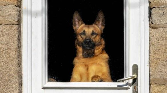 best dog doors