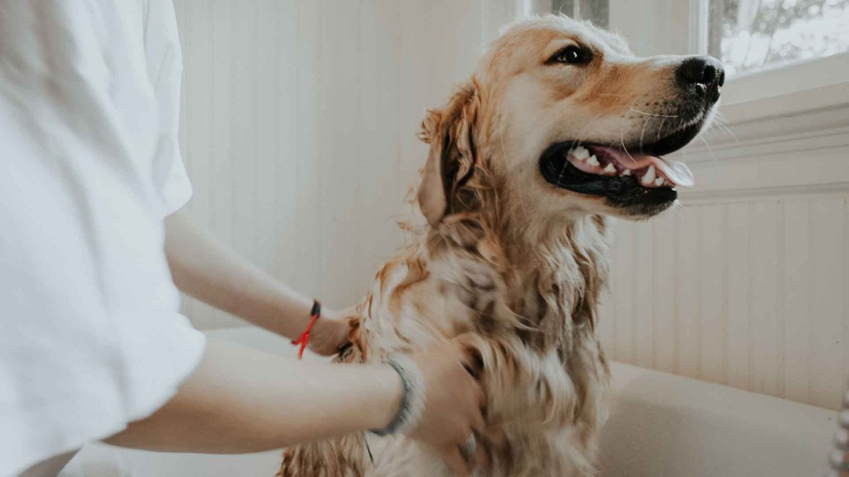 Best Flea Treatments For Dogs Of 2021: Reviews & Buying Guide