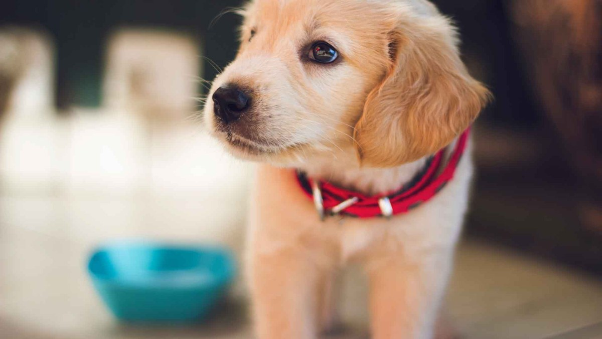 14 Best Dog Foods For Puppies (2021)