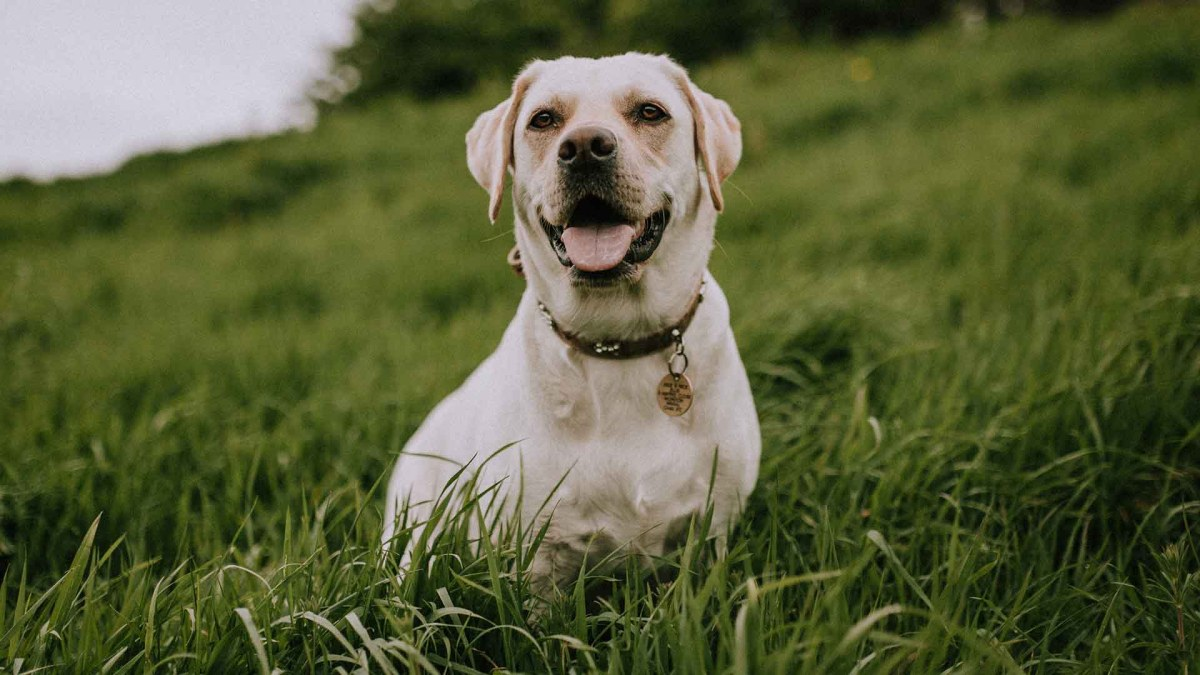 Best Glucosamine For Dogs 2021: Reviews & Buyer's Guide