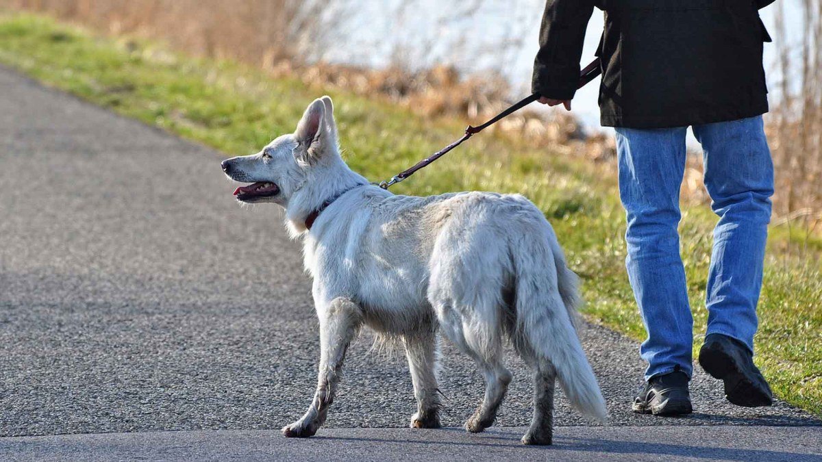 15 Best Retractable Dog Leashes They'll Love (2021)