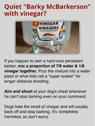 Quiet Barky McBarkerson with vinegar?