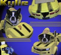 Bumblebee From Transformers - TheDogTrainingSecret.com