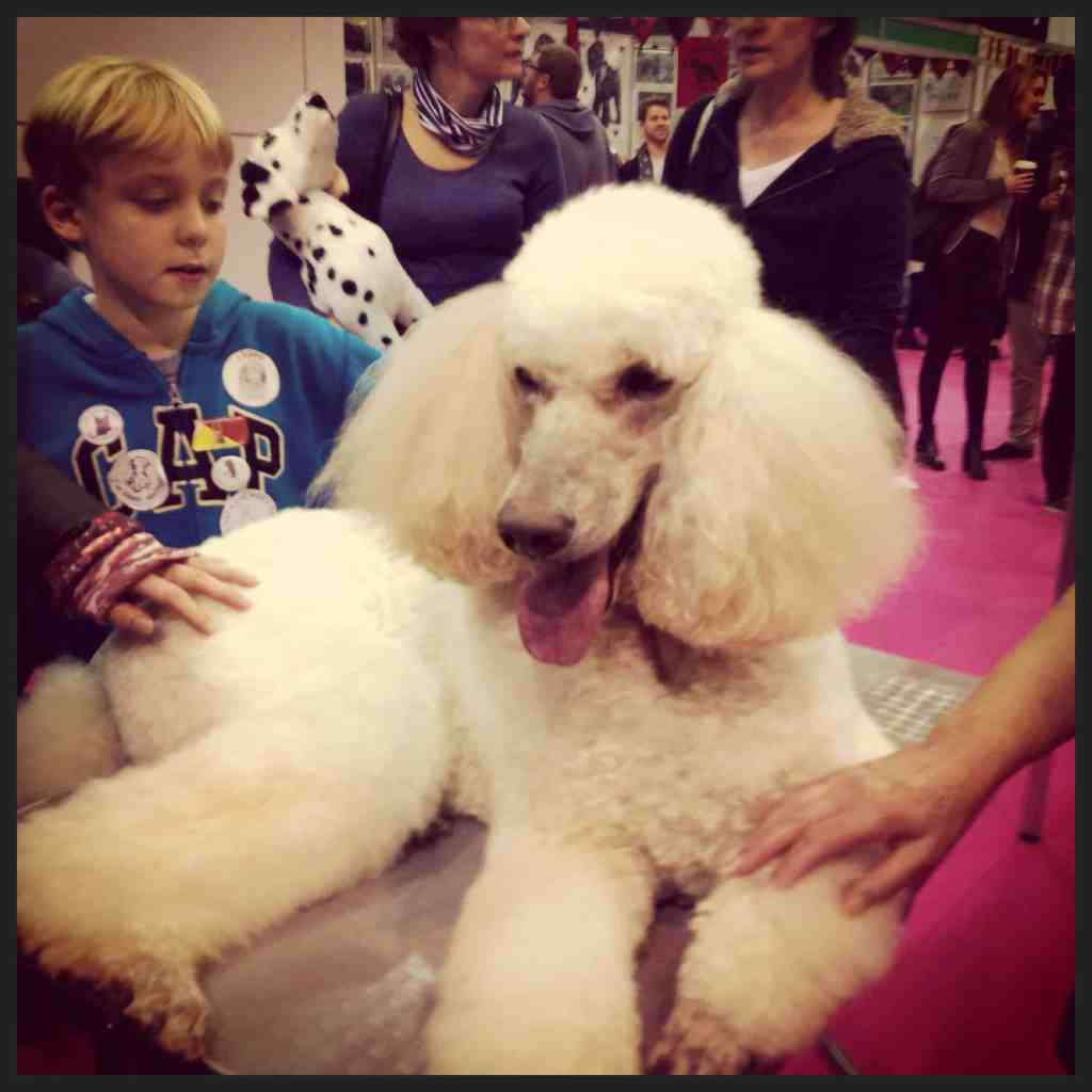 Discover Dogs London 2014 at Earls Court