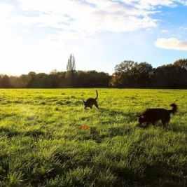 London Dog Walks - Barnes & Putney Commons