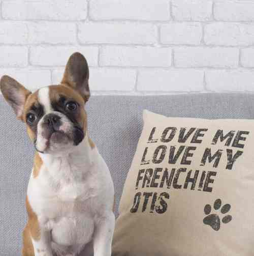 The Dogvine Christmas Gifts for Dog Owners - Personalised Dog Cushion