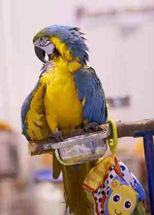 The London Pet Show - Parrot