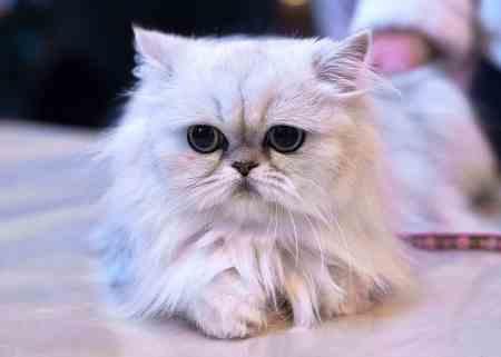 The London Pet Show - Cats