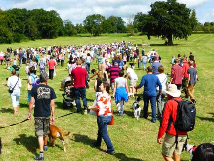DogFest  - Great Dog Walk