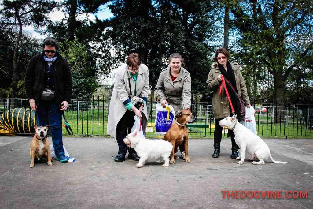 Best Rescue - Dog Factor 2016
