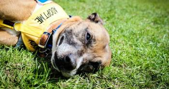 What's On - The Latest London Dog Events For Spring