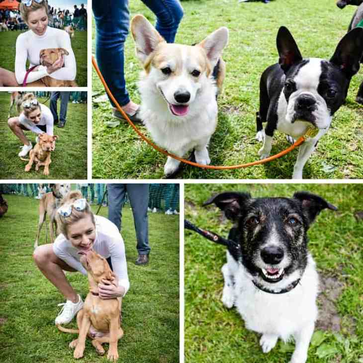 All Dogs Matter Great Hampstead Bark Off - Best Celebpawity