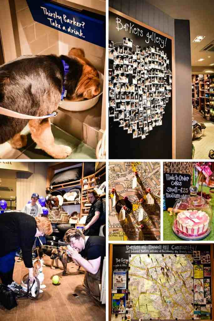 Barkers of Muswell Hill Details - London Dog Rescue