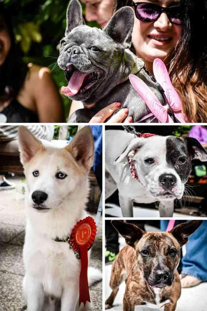 Pup Idol 2016 4