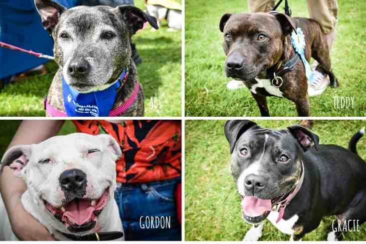 Sweetest Staffies - Hounds On The Heath