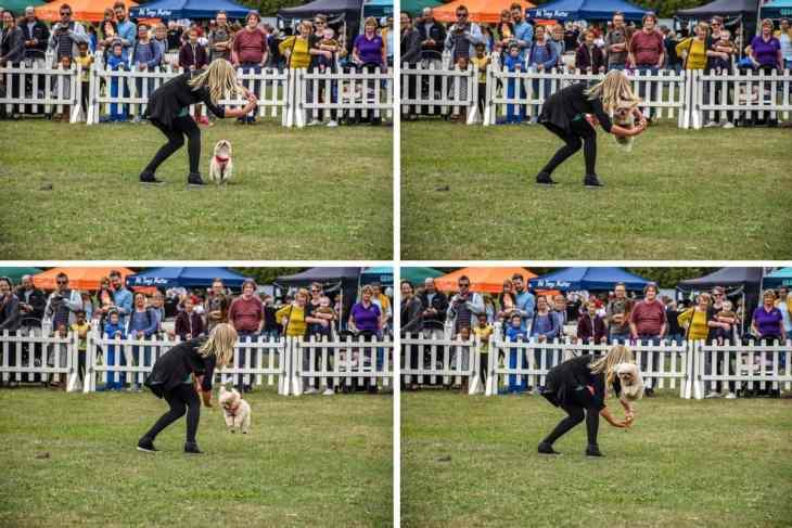 Pup Aid Lucy Heath and Trip Hazard
