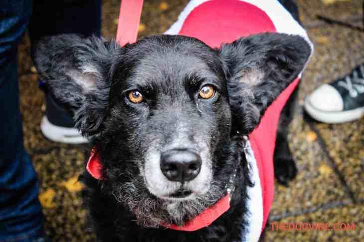 Belinha - Dog Events For Christmas