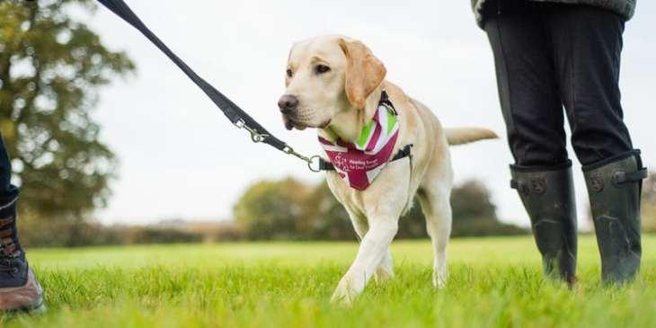 London Dog Events 2017 - the-great-british-dog-walk-2017