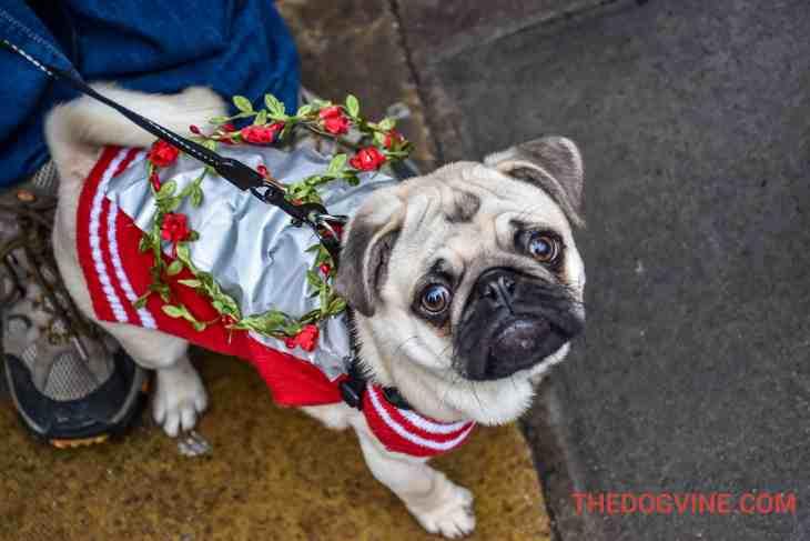 All Dogs Matter Valentines Walk-26
