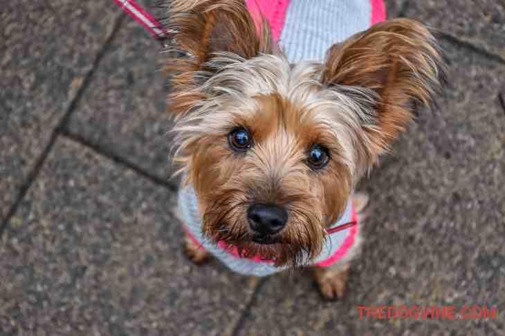 All Dogs Matter Valentines Walk-40