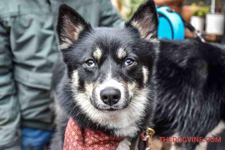 All Dogs Matter Valentines Walk-8