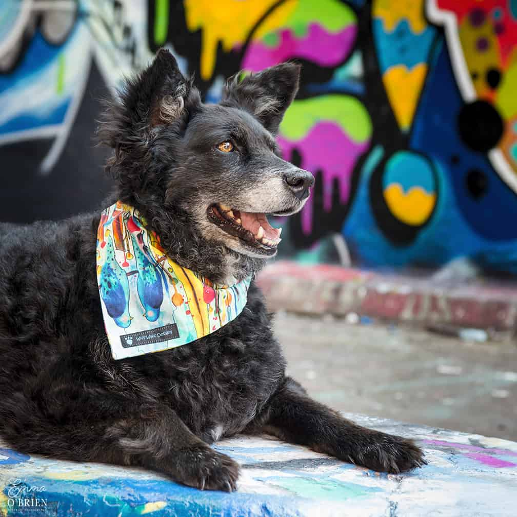 Belinha London Dog Photo Shoot with Emma OBrien_0164