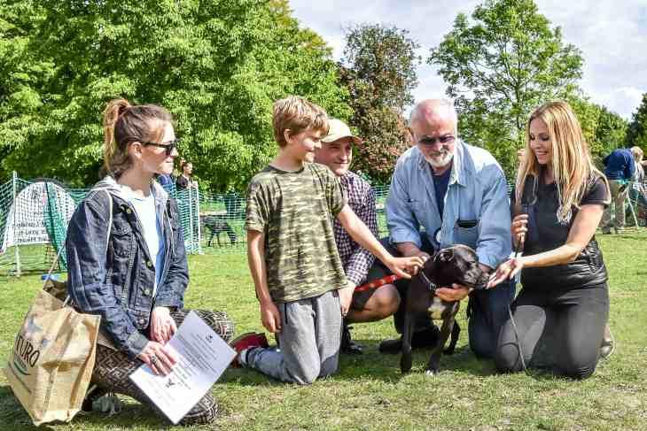 Mr Heath - The Great Hampstead Bark Off 2017