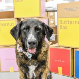 Ned - Butternut Box