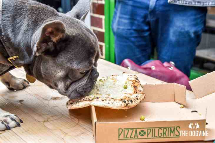 Pooches Get a 'Pizza' The Action At Dog-Friendly Pizza Pilgrims 15