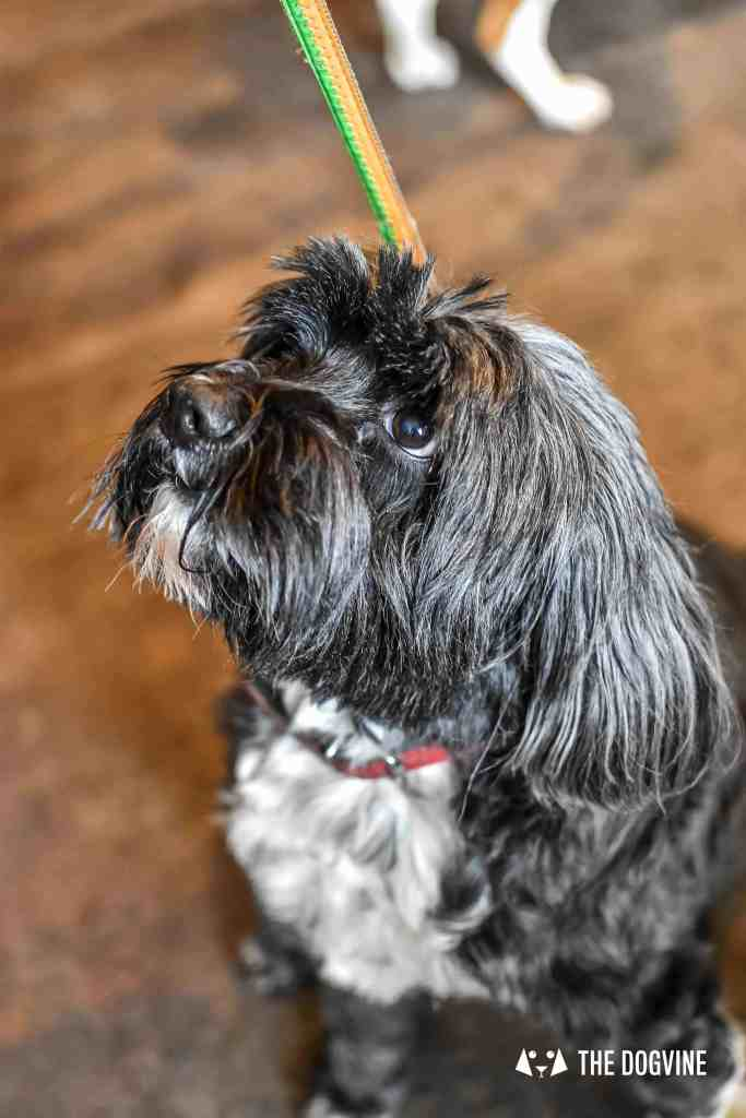 Canine Christmas Crackers at The Windmill Clapham 10