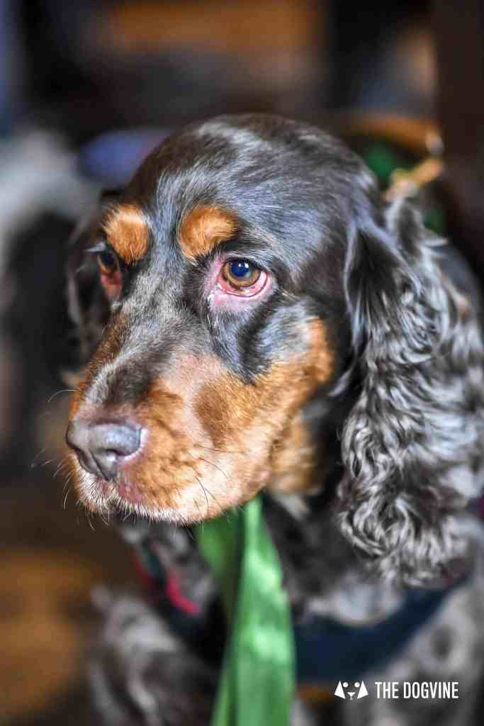 Canine Christmas Crackers at The Windmill Clapham 19