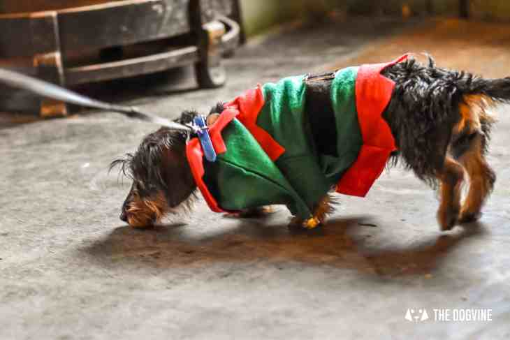 Canine Christmas Crackers at The Windmill Clapham 28