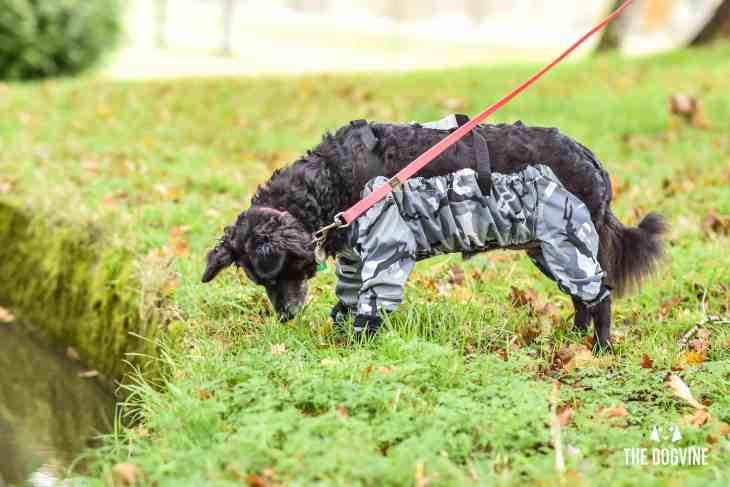 The Dogvine - Dog Trousers Review 8