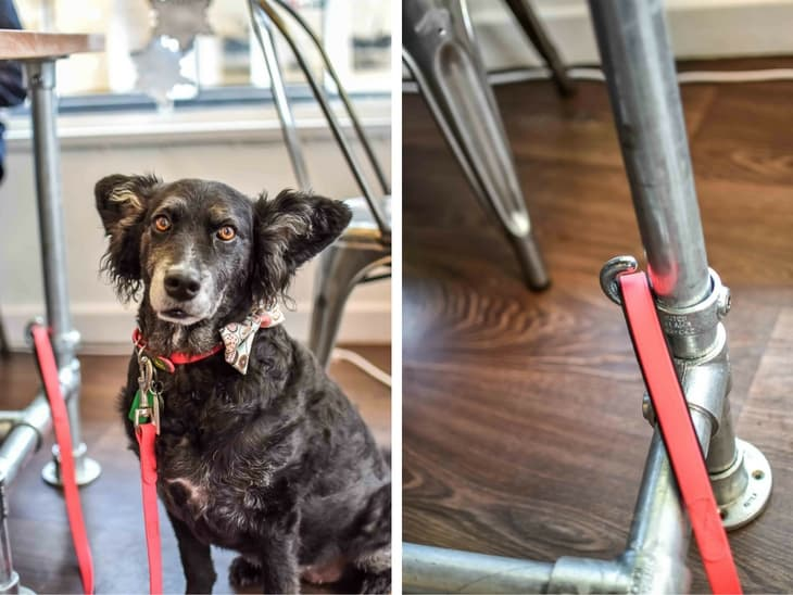 Dog-Friendly Cafe - Paws for Coffee Sheen Lead Hook