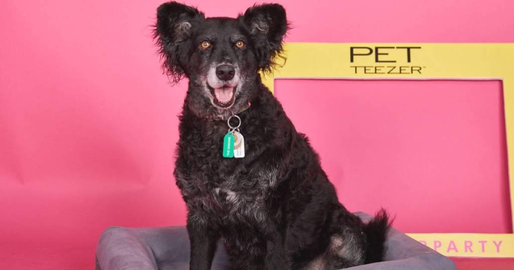 Introducing The Pet Teezer, The New Tangle Teezer For Dogs