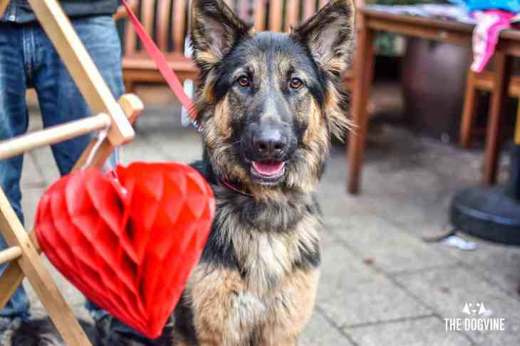London Dogs Celebrate Valentines Day On The All Dogs Matter Valentines Walk - London Dog Event 64