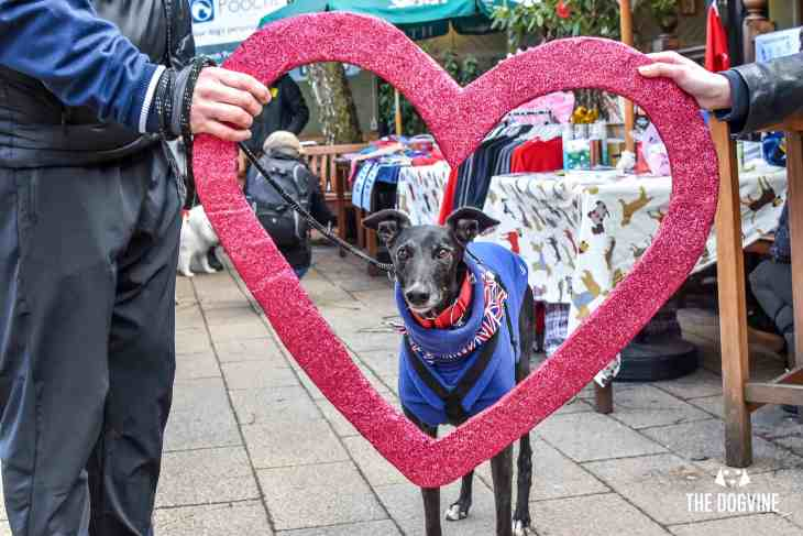 London Dogs Celebrate Valentines Day On The All Dogs Matter Valentines Walk - London Dog Event 74