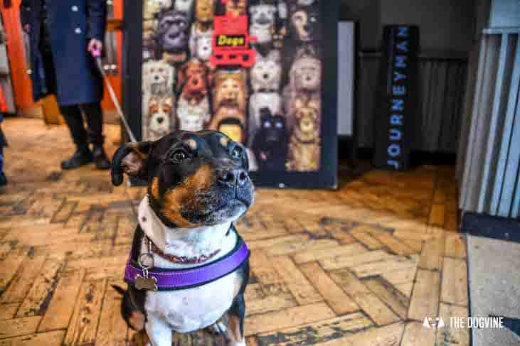 Dog-Friendly Cinema - Picturehouse Clapham - Isle of Dogs 37