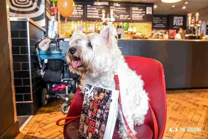 Dog-Friendly Cinema - Picturehouse Clapham - Isle of Dogs 47