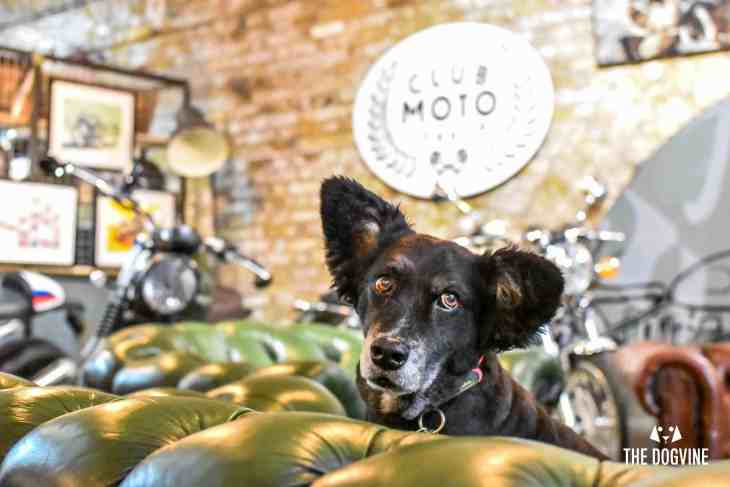 Dog-Friendly Shoreditch Mutts and Motorcycles At The Bike Shed 16