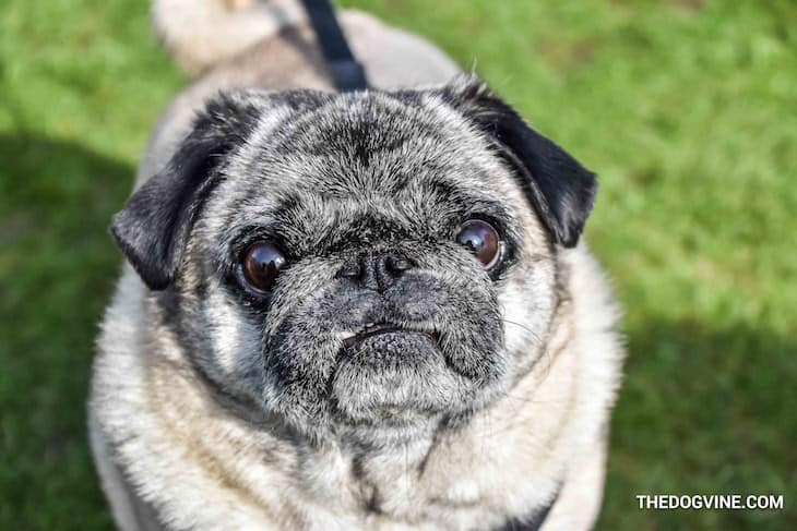 The London Dog Meetups Guide For You And Your Dog - Things to Do With Your Dog 13