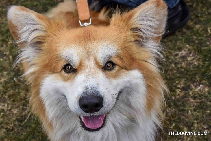 The London Dog Meetups Guide For You And Your Dog - Things to Do With Your Dog 7
