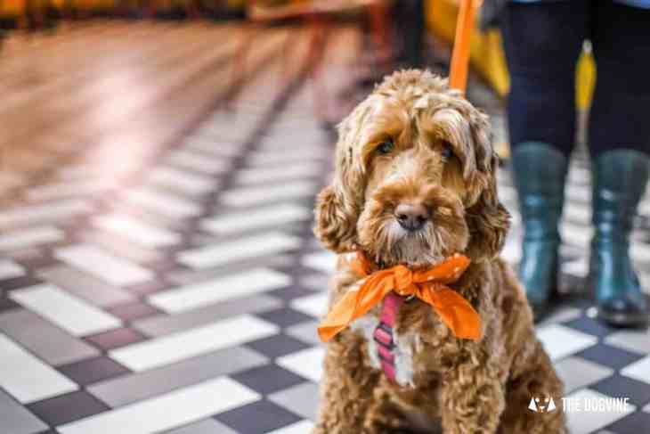 Picturehouse Central Dog-Friendly Cinema Isle of Dogs 3