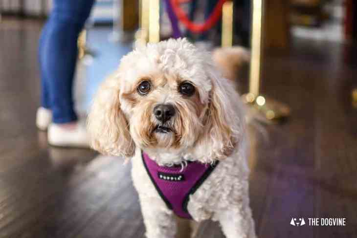 Picturehouse Central Dog-Friendly Cinema Isle of Dogs 40