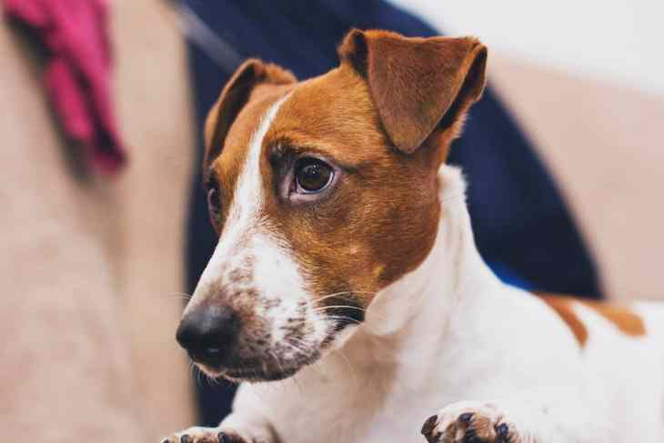 Where To Do A Dog First Aid Course In London 2